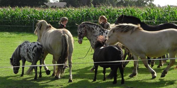pferdeureiten1